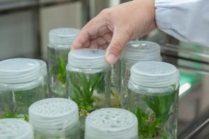 Clonación de plantas